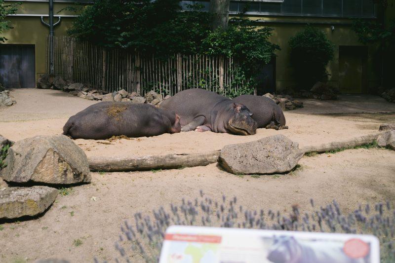 Der Kölner Zoo setzt auf ViCo, um auch den Zugang zu Hippodom zu sichern. So kann der Besucher die Tiere entspannt genießen. (Quelle: dimedis)